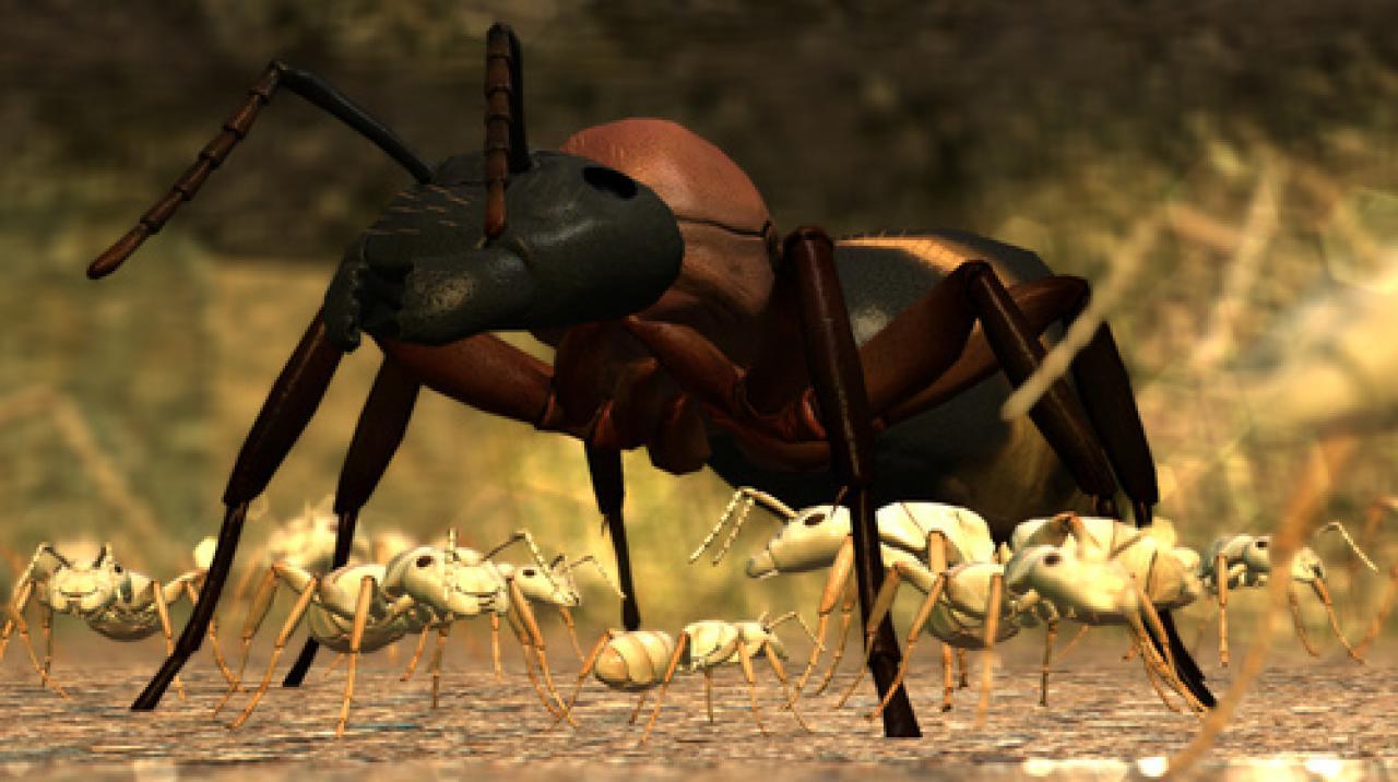 Ameisen Spiele