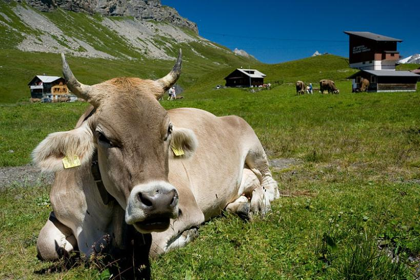 Crypto mining: Farmer relies on cow dung to farm Ethereum