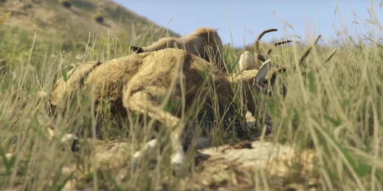 Onto the Land dokumentiert die GTA 5-Fauna.